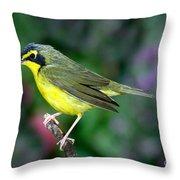 Kentucky Warbler Throw Pillow