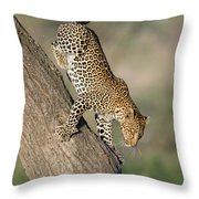 Leopard Panthera Pardus On Tree, Ndutu Throw Pillow