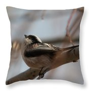 Long-tailed Tit Perched On Twig Throw Pillow