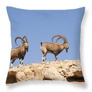 Male Nubian Ibex Throw Pillow