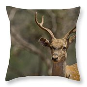 Mesopotamian Fallow Deer  Throw Pillow