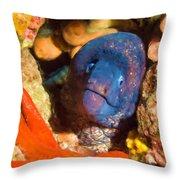 Moray Eel With Starfish Throw Pillow