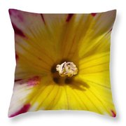 Morning Glory Named Red Ensign Throw Pillow