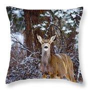 Mule Deer In Snow Throw Pillow