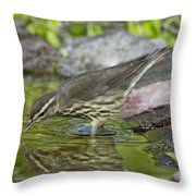 Northern Waterthrush Throw Pillow