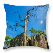 Old And Ancient Dry Tree On Top Of Mountain Throw Pillow