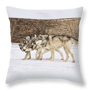 3 Pack Throw Pillow