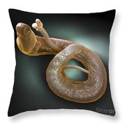 Parasitic Worm Schistosoma Throw Pillow