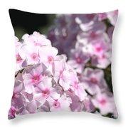 Phlox Paniculata Named Bright Eyes Throw Pillow
