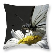 Pine White Butterfly Throw Pillow