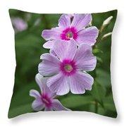 Pink Wood-sorrel  Throw Pillow