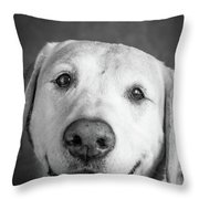 Portrait Of A Boxer Dog And Golden Throw Pillow