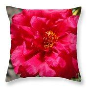 Portulaca Named Sundial Fuchsia Throw Pillow