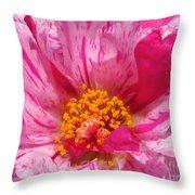 Portulaca Named Sundial Peppermint Throw Pillow
