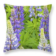 Purple Lupine Flowers Throw Pillow