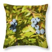 Ripe Maine Low Bush Wild Blueberries Throw Pillow