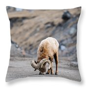 Rocky Mountain Big Horned Sheep Throw Pillow