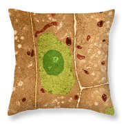 Root Cells Of Plant Tem Throw Pillow