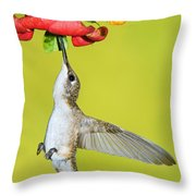 Ruby-throated Hummingbird Female Throw Pillow