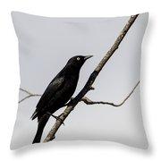 Rusty Blackbird Throw Pillow