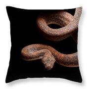 Savu Python On Tree Branch Throw Pillow