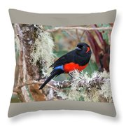 Scarlet-bellied Mountain-tanager Throw Pillow