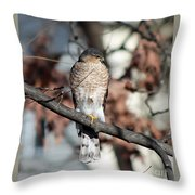 Sharp-shinned Hawk 2 Throw Pillow