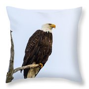 Sitting In The Morning Sun Throw Pillow
