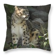 Snow Leopard On The Prowl Throw Pillow