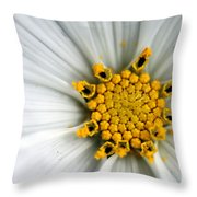 Sonata Cosmos White Throw Pillow