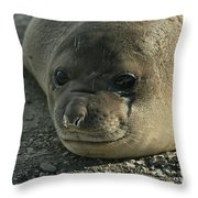 Southern Elephant Seal  Throw Pillow