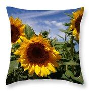 3 Sunflowers Throw Pillow