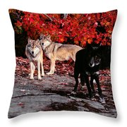 Timber Wolves Under A Red Maple Tree - Pano Throw Pillow