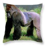 Western Lowland Gorilla Silverback Throw Pillow