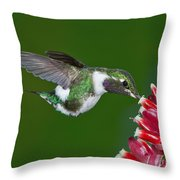 White-bellied Woodstar Throw Pillow