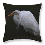 White Heron Portrait Throw Pillow