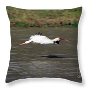 White Ibis In Flight Throw Pillow