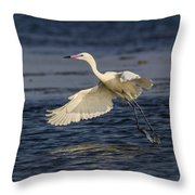 White Morph Redish Egret Throw Pillow