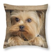 Yorkshire Terrier Dog Throw Pillow