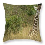 Young Giraffe In Kenya Throw Pillow