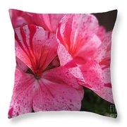 Zonal Geranium Named Avenida Mosaic Purple Throw Pillow