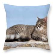 Cat In Hydra Island Throw Pillow