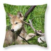 Gray Wolf Pup Throw Pillow