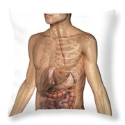 The Digestive System Throw Pillow