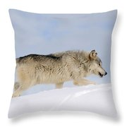 Wolf In Winter Throw Pillow