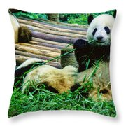 3722-panda -  Colored Photo 1 Throw Pillow