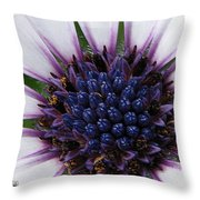 African Daisy Named Soprano White Throw Pillow