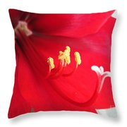 Amaryllis Named Black Pearl Throw Pillow
