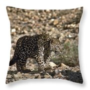 Arabian Leopard Panthera Pardus Throw Pillow