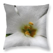 Bacopa Named Snowtopia Throw Pillow